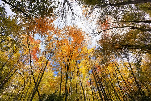 smoky-mountain-autumn.jpg