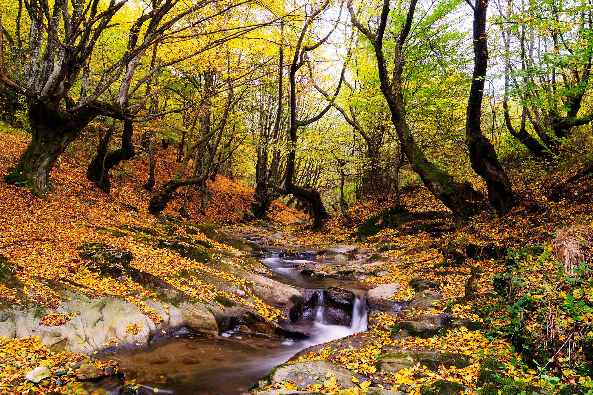 smokies-autumn-creek.jpg