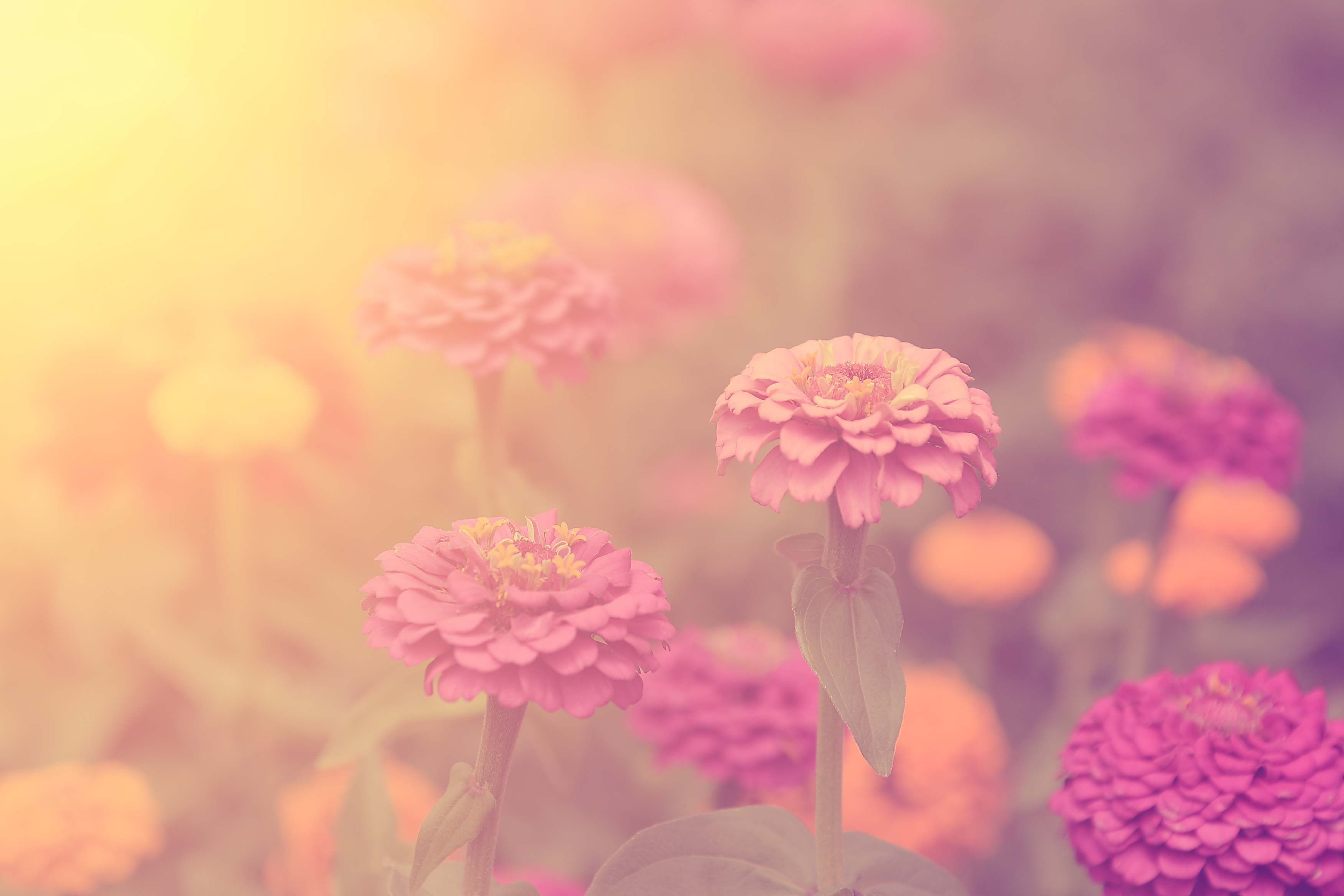 Vintage style picture of wildflowers
